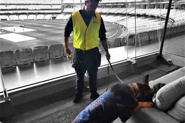 Detector Dogs Australia MCG
